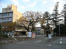 高知大学(農林海洋科学部)