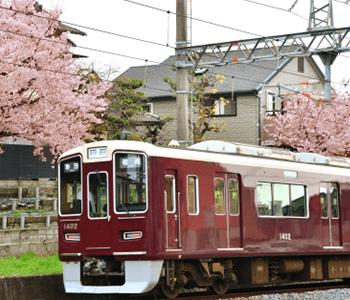 桜の木と路面電車