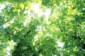 森の自然風景