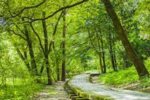 緑の中の小道
